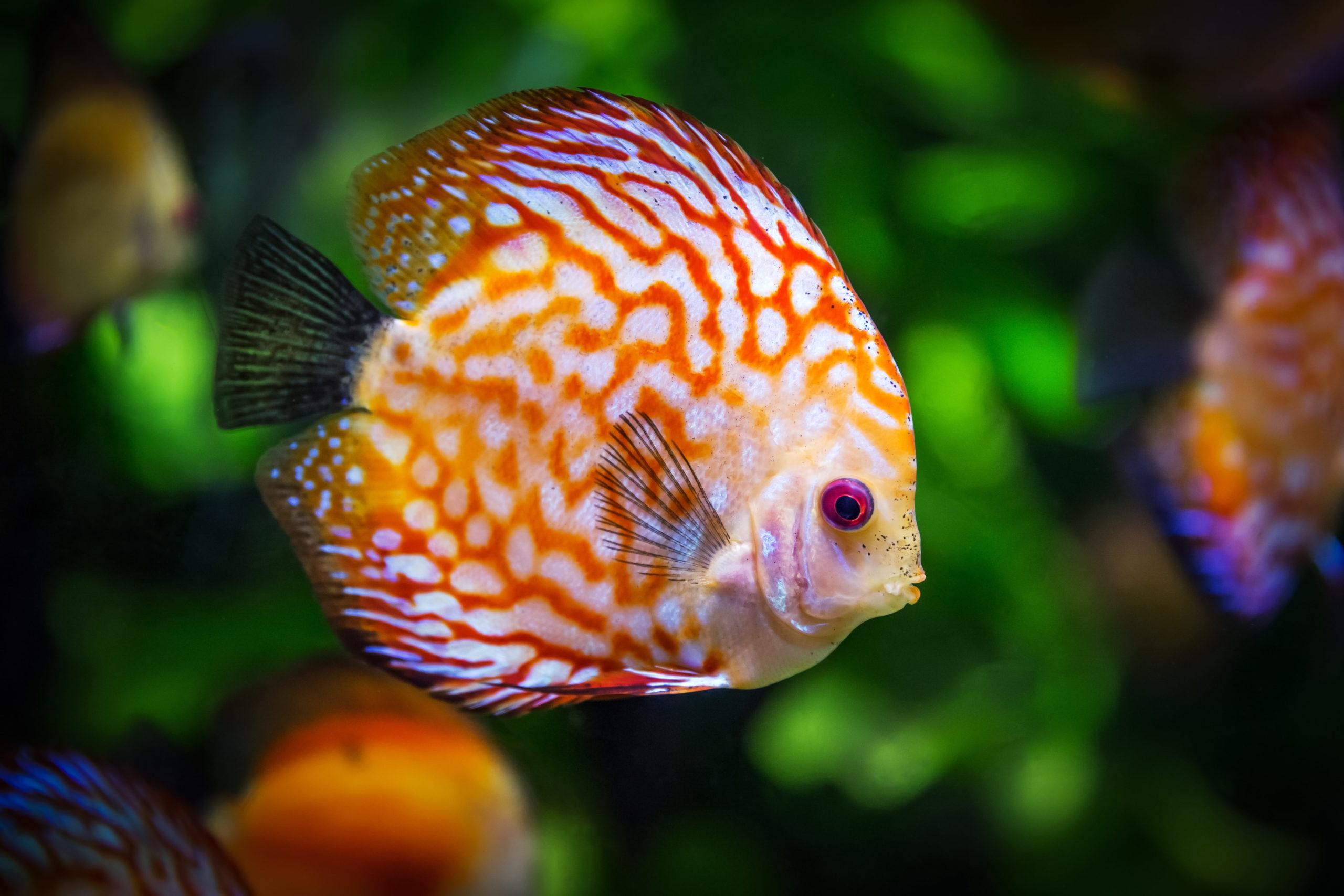 Live Fish Feel Bad For Dead Fish Claims PETA